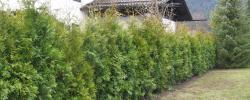 Pflanzflächenplege